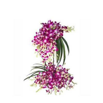 Orchid Floral Arrangement