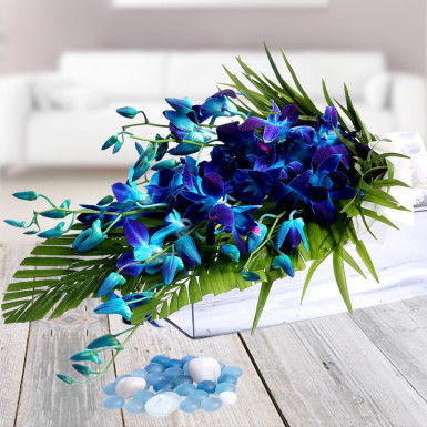 Nice Blue Orchid Bunch